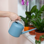 House plants that can improve your air